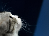 Web inventor's biggest surprise about the Internet? 'Kittens'