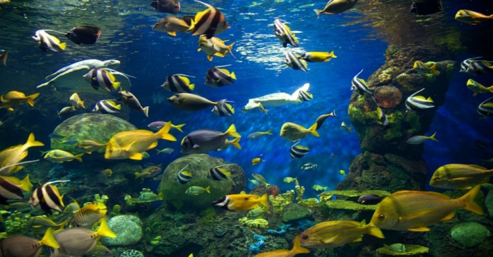 Augmented Reality Helps the Researchers to Understand the Active Sensing in Fish